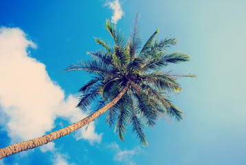 Lonely palm tree on sky background.