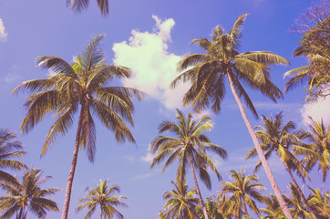 Palm trees with sunny day.