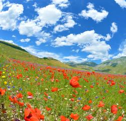 Panorama - Castelluccio di Norcia - Fioritura