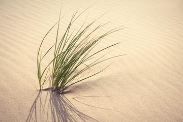 Gras in den Dünen Strand