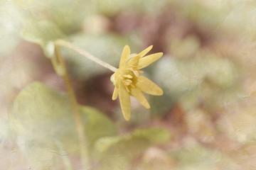 Single spring flower