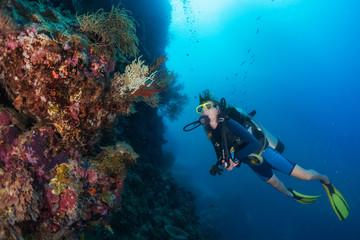 Wall Mural - Divers