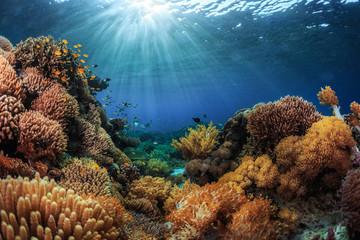 Keuken foto achterwand Koraalriffen Indonesia