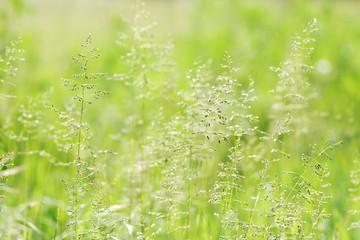 Light green grass for background