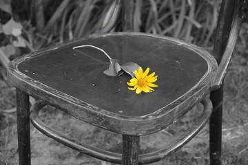 Утраченные надежды. На монохромной фотографии изображен старый стул, на котором лежит одинокий желтый цветок