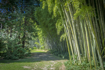 Allée de bambous verts dans la Bambouseraie d'Anduze