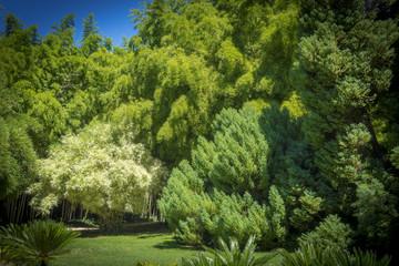 Bambous blancs et verts dans la Bambouseraie d'Anduze