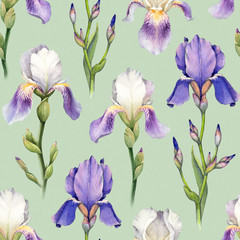 Watercolor iris flower illustration. Seamless pattern