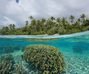 Split-shot over under water surface near tropical shore with coconut trees and fire coral underwater, Huahine island, south Pacific ocean, French Polynesia