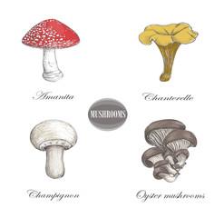 Champignon, chanterelle, amanita, oyster mushrooms, porcini. Set