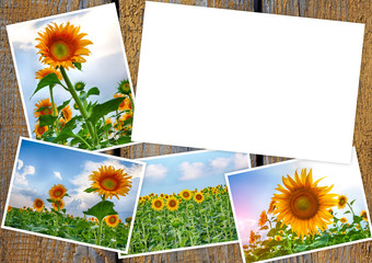 Collage from colors of a sunflower on wooden table with copy space for your text or photo