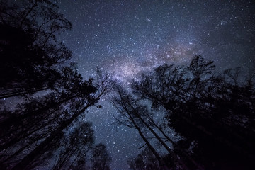Night fotografiya- starry sky, the Milky Way and the dark crowns of trees tending upwards, into the sky. sky Night landscape