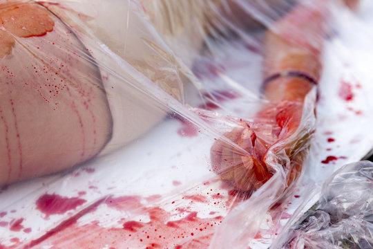 Vegan vegetarian bloody hand protest