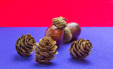 pine cone with acorn on blue and red background