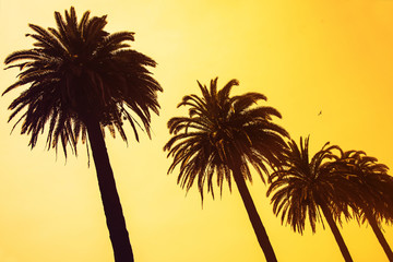 Palm trees at sunset sky background. applied toning