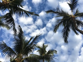 Palm Trees and Clouds