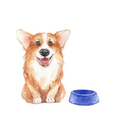 Corgi. Cute dog, isolated on white. Watercolor painting 1
