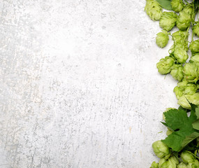 Hop twig over gray table background. Vintage style. Beer production ingredient. Brewery. Fresh-picked whole hops close-up. Brewing concept wallpaper.