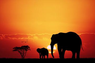 elephants in African landscape