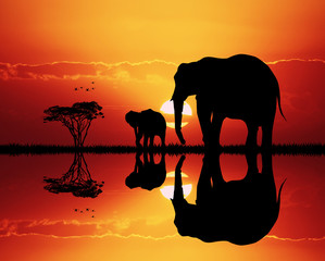Foto op Canvas Rood traf. elephants in African landscape at sunset