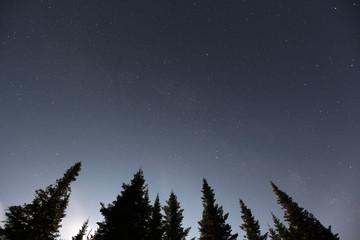 Nuit en forêt