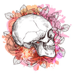 Skull And Flowers. Hand Drawn Sketch With Watercolor Effect