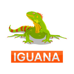 green iguana without line