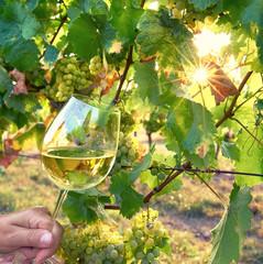 Weinglas in der Abendsonne, Weiswein