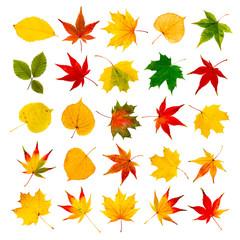 Wall Mural - Bunte Herbstblätter als Collage vor weißem Hintergrund