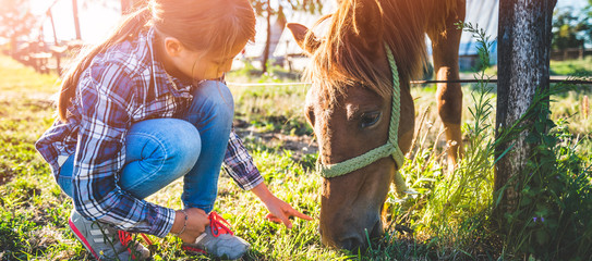 Girl feeding Brown Horse