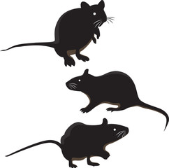 Rat mouse mice isolated on white background. Wild rodent animal mouse rat vector illustration character