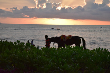 Sunset view with horse