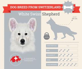 White Shepherd dog breed vector infographics
