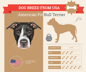 American Pit Bull Terrier dog breed vector infographics