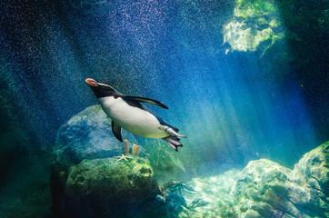 Penguin diving Wall mural