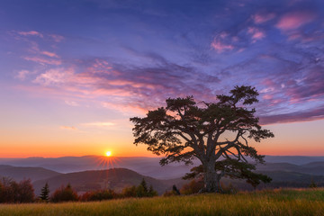 Beautiful mountain landscape with lone tree at dawn