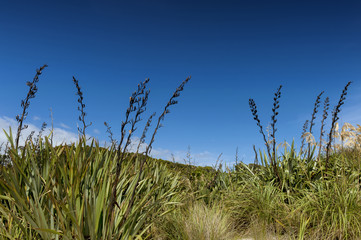 Rough grassland at Tauparikaka Marine Reserve, Haast, New Zealand