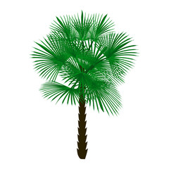 Green palm tree isolated on white background illustration