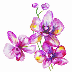 beautiful original red blooming orchids. watercolor art.