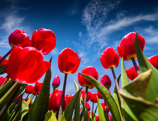 Wall Mural -  Beautiful flowers on the blue sky background at the
