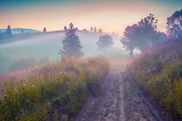 Wall Mural - Foggy summer sunrise in the Carpathian village