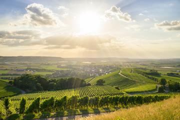 Abendsonne im Weinberg