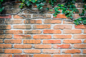 Orange brick wall with climbing plan for background and texture.