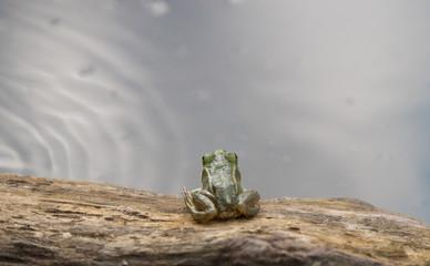 Маленький лягушонок и пруд