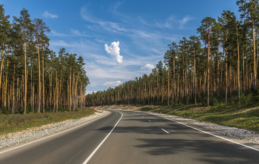 The road passing through the pine forest.