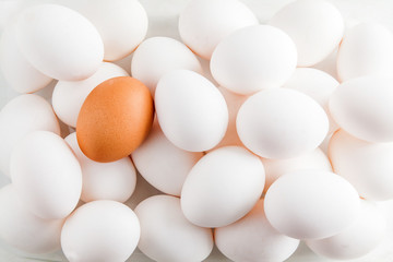 Chicken white background raw eggs and one brown