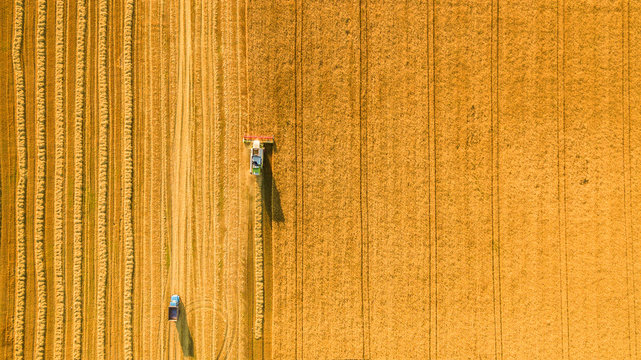 Harvester machine working in field . Combine harvester agriculture machine harvesting golden ripe wheat field. Agriculture. Aerial view. From above.