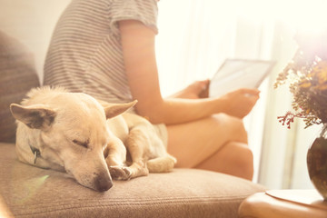 Close up on a dog sleeping and woman holding tablet and reading  in the background. Sunset rays.