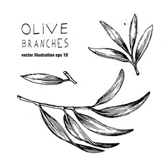 Set of hand drawn vector olive branch and laeves. Olives oil sign. Symbol  peace. Greek religious . Healthy products label. Organic cosmetics. Eco food. Natural element.