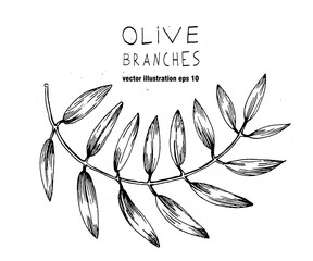 Set of hand drawn vector olive branch logo. Olives oil sign. Symbol peace. Greek religious . Healthy products label. Organic cosmetics. Eco food. Natural element.